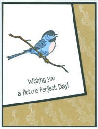 pictureperfectbirdperchsl17.jpg